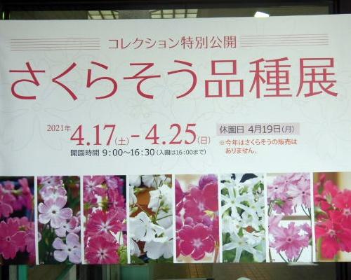 sakurasou0417a.JPG